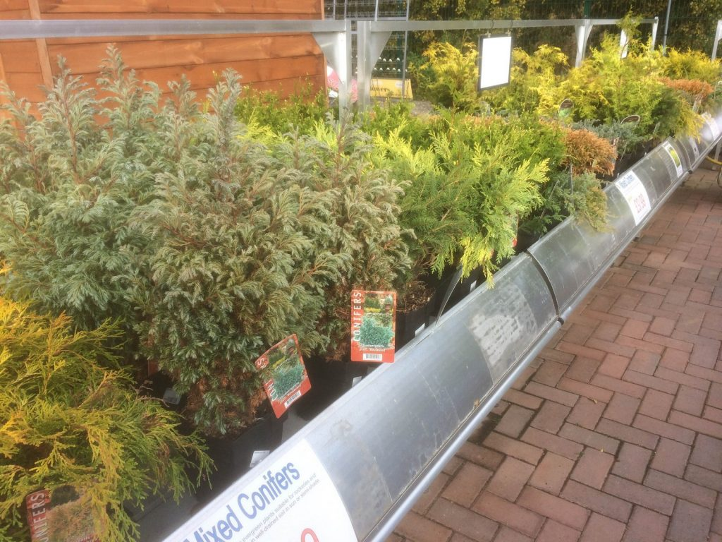 conifers-sharnford-garden-centre