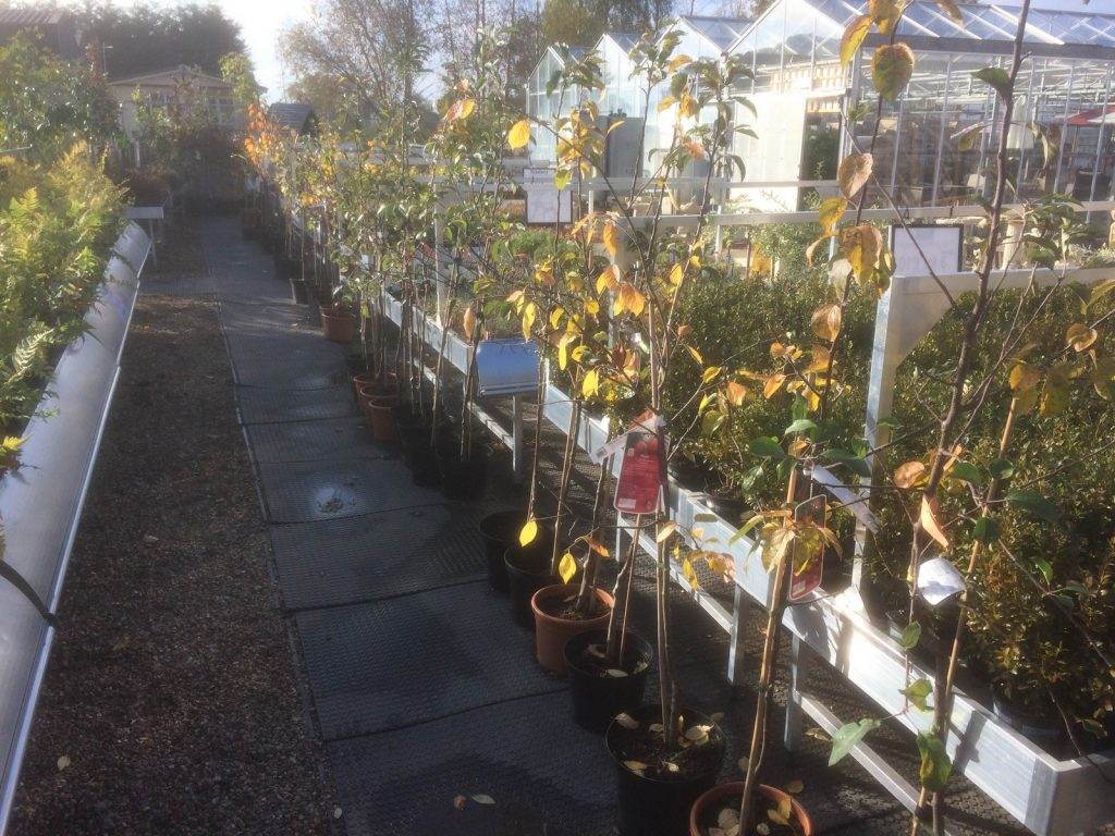 fruit-trees-sharnford-garden-centre