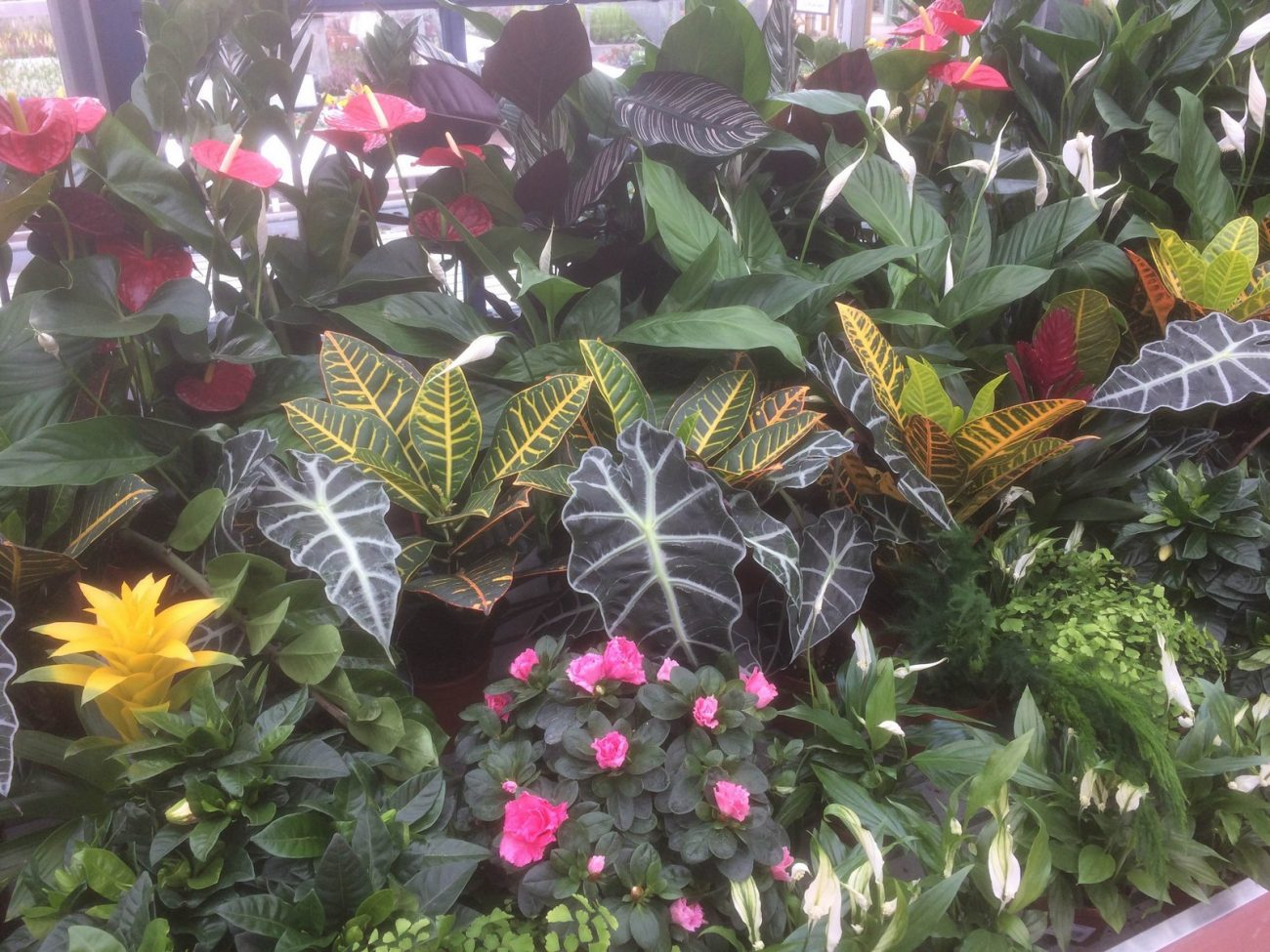 House Plants @ Sharnford Garden Centre