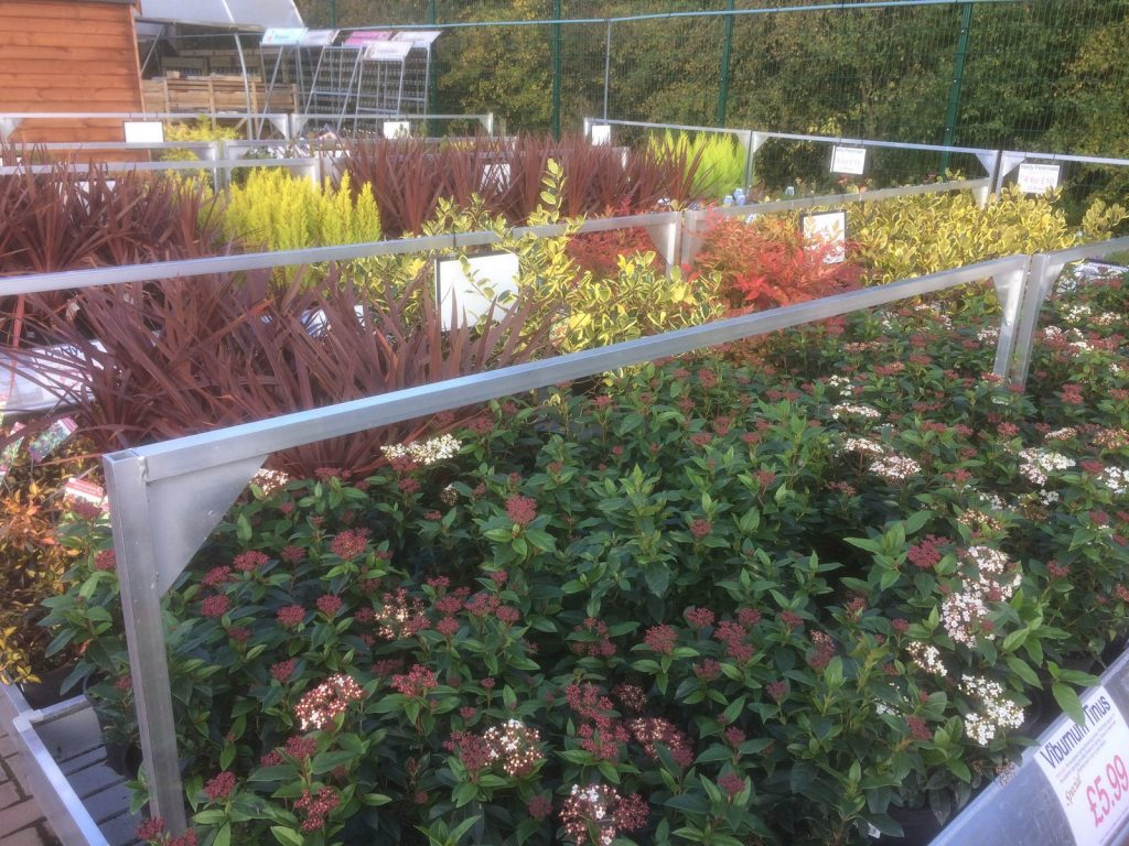 shrubs-sharnford-garden-centre